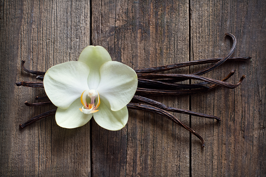 Orchid - Flower - Vanilla - Pod - Flowers - Chamomile Therapies - Clinical Aromatherapy, Berkhamsted
